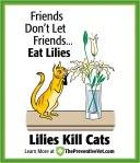 lilies-cat